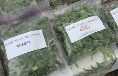 micro greens samples